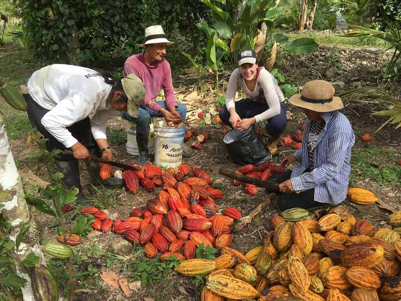 Where do chocolate & cocoa trees come from?